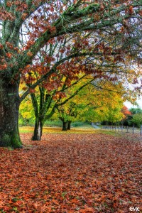 fall_autumn_trees